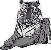 Sketch of white tiger. Vector illustration — Stock Vector