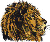 Sketch of a big male African lion. Vector illustration — Stock Vector