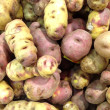Peruvian potato - Stock Photo