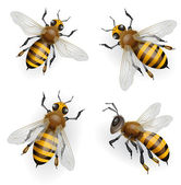 Honey Bees — Vector de stock