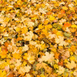 Royalty-Free Stock Photo: Leaves background