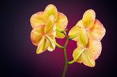 Orkide arkadan — Stok fotoğraf