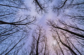 Trees and sky — Stock Photo