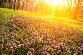 Flowers in morning light — Stock Photo