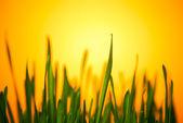 Green grass in warm light — Stock Photo