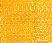 Panal amarillo — Foto de Stock