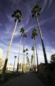 Palm walk in Arizona State University campus — Stock Photo