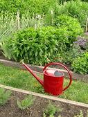 庭の水まき缶 — ストック写真