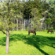 Stock Photo: Horses in spring