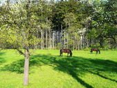 Horses in spring — Stock Photo