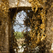 Gate with Yellow Leaves — Stock Photo