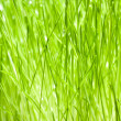 Green Blades of Grass - 图库照片