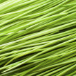 Green Blades of Grass - Stock Photo