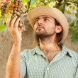 Farmer with Grapes - Stock Photo
