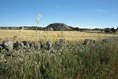 мрамор-хилл в поле пшеницы — Стоковое фото