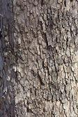 Gray Plane Tree Bark — Stock Photo