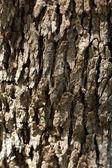 オリーブの木の樹皮 — ストック写真
