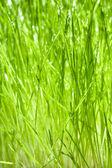 Mokre zielone źdźbła trawy — Zdjęcie stockowe