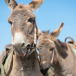 Stock Photo: A few donkeys