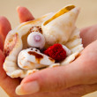 Collecting shells on beach — Stock Photo