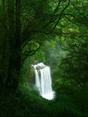 Waterfall in Rainforest, Victoria — Stock Photo