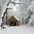 Abandoned house in snowy woods — Stock Photo #10434134