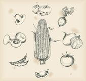 Gemüse zeichnungen - freigestellte objekte — Stockvektor