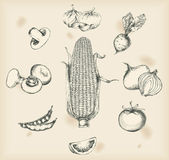 Vegetables drawings- isolated objects — Vettoriale Stock