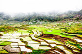 Rice terraces in mist — Stock Photo