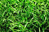 綠草地. — 图库照片