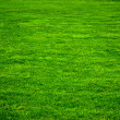 Bacground of green grass. — Stock Photo