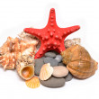 Seashells and starfish on a white background - Stock Photo