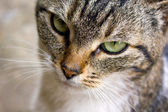 Cat's eye — Stock Photo