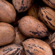 Pecans (Carya illinoinensis) — Stock Photo