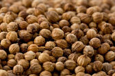 Coriander Seeds (Coriandrum sativum) — Stock Photo