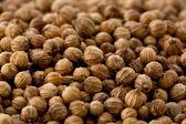 Coriander Seeds (Coriandrum sativum) — Stock Photo