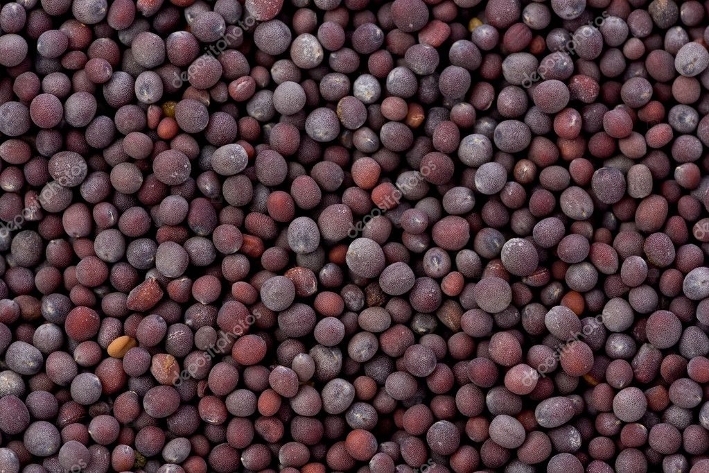 Background texture of a pile of black mustard seeds.  Stock Photo #10557017