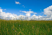 Green grass with blue sky and clouds, in Zabljak, Montenegro — Stock Photo