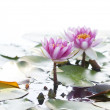Close-up of water lilies in the lake, intentionally over-exposed background to bring attention to the main subject — Stock Photo