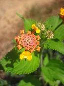 Garden plant — Stock Photo