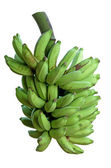 Apple Bananas fresh off the Tree — Stock Photo