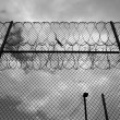 Razor wire prison fence — Photo