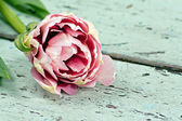 Pink tulips on a wooden surface — Stock Photo