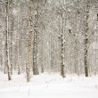 Snowy wintry forest — Stock Photo #10619732