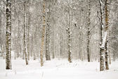 Snowy wintry forest — Stock Photo