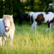 Group of horses surrounded by grasslands in Poland — Stock Photo