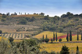 Tuscany fields — Stock Photo
