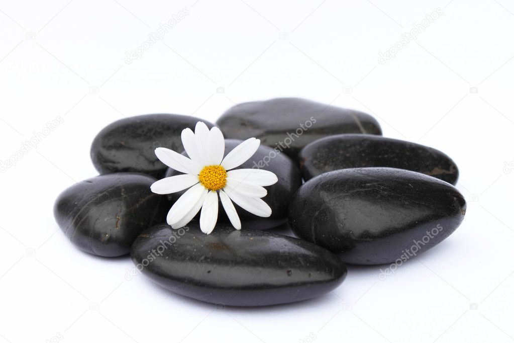 Flower on black pebbles isolated on white background — Stock Photo #10526173