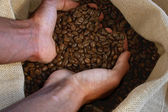 Hand takes coffee beans — Stock Photo