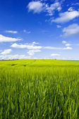 Field with blue sky — Stock Photo